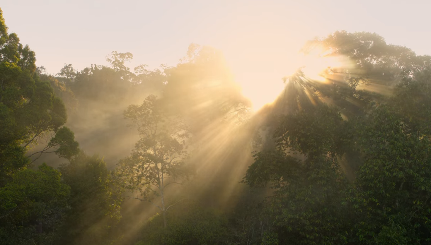 The sun is shining intensely across the treetops of a rainforest.