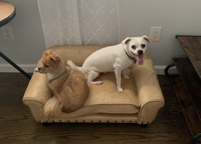 The dog sofa