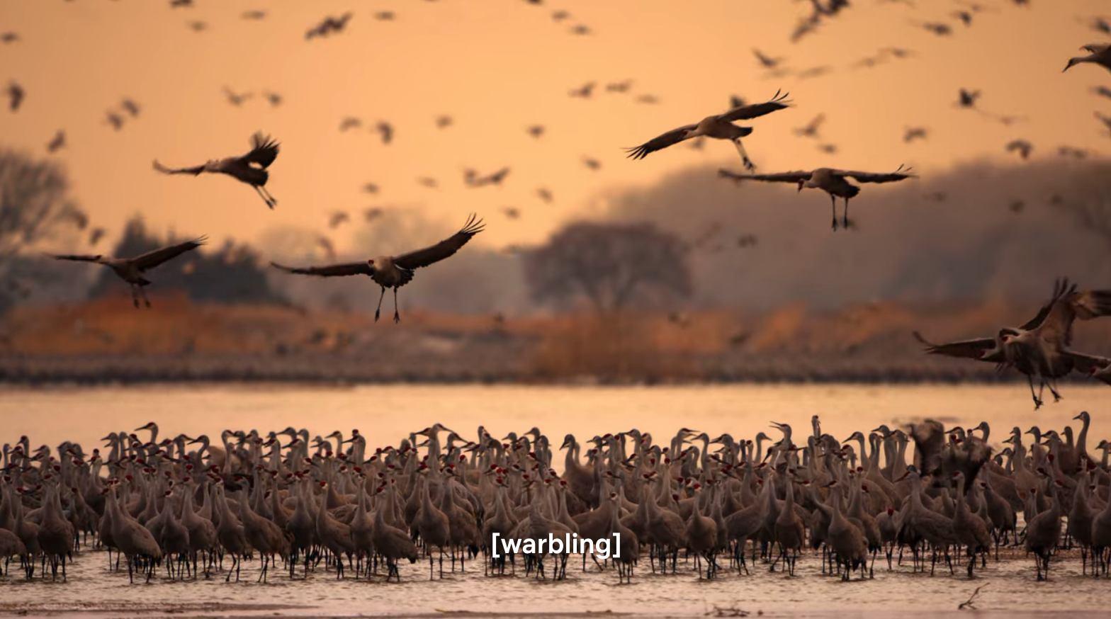 A flock of birds in African wetlands at sunset.