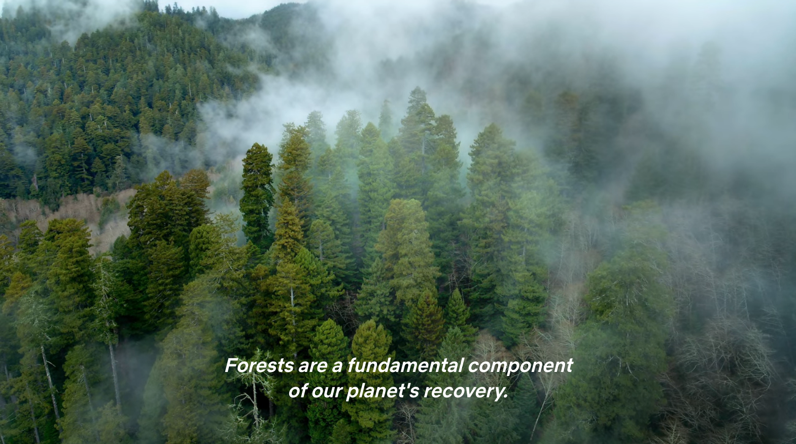 """Aerial view of a pine forest with mist drifting between the trees, and caption: """"Forests are a fundamental component of our planet's recovery""""."""