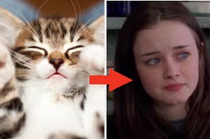 A cat is resting on the left with an arrow pointing at Rory Gilmore