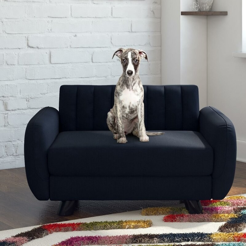 Blue pet sofa with dark brown legs