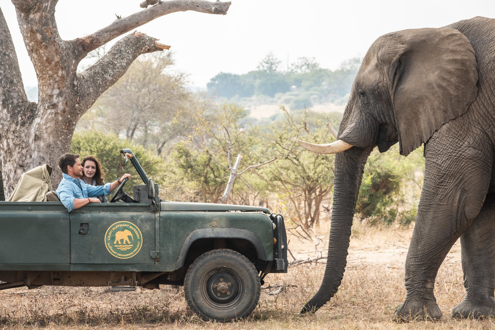Kate and Derek driving in the rescue jeep with an elephant in front of them.