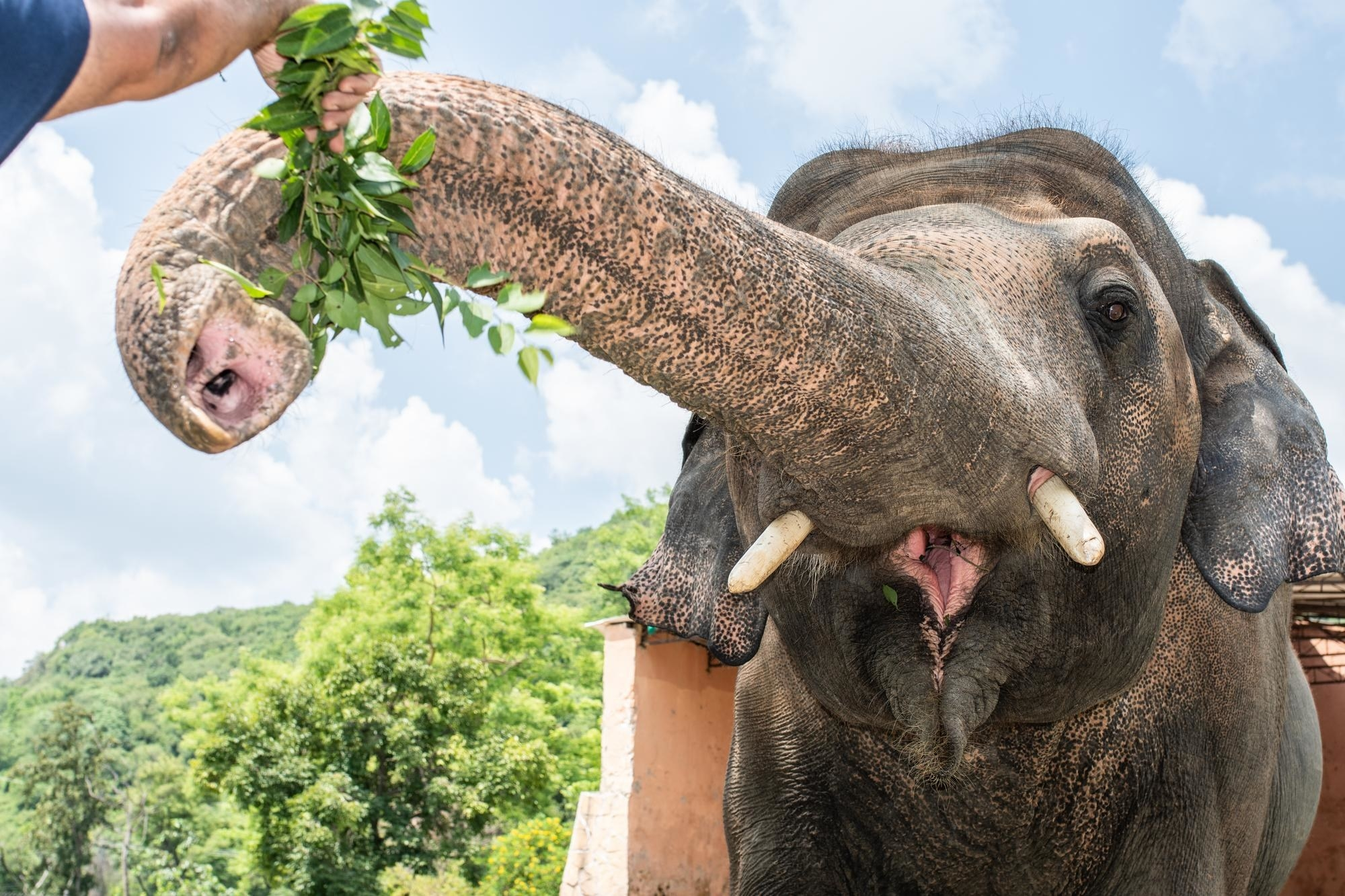 Photo of Kaavan the elephant eating some greens