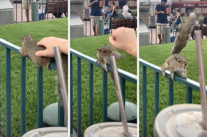 Someone pets a wild squirrel, who then turns around angrily, ready to attack