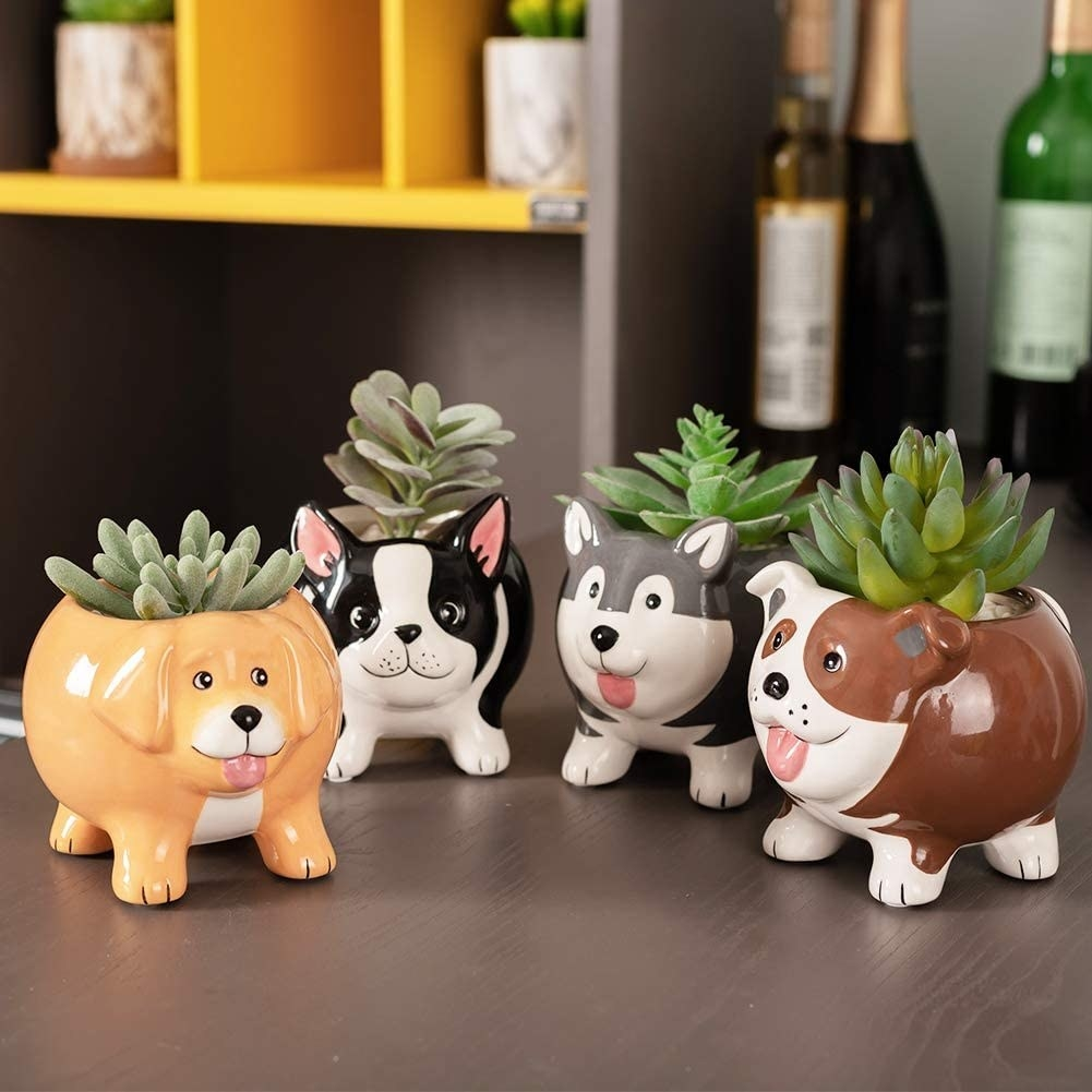 The rounded planters shaped like a Golden Retriever, Boston Terrier, Husky, and Bulldog, each holding a small succulent