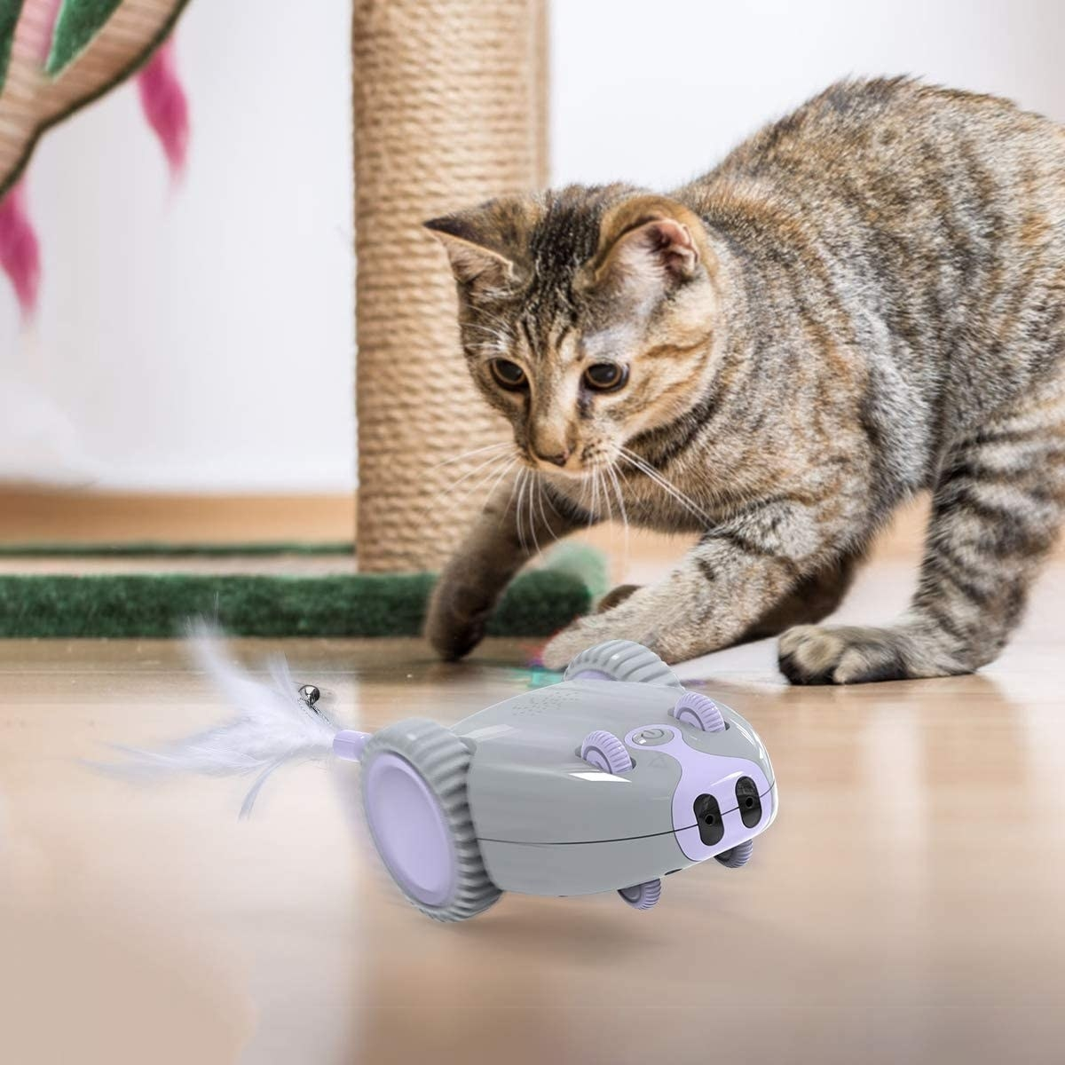 a striped cat chasing a grey and purple toy mouse in wheels with a feather attached to the back of it