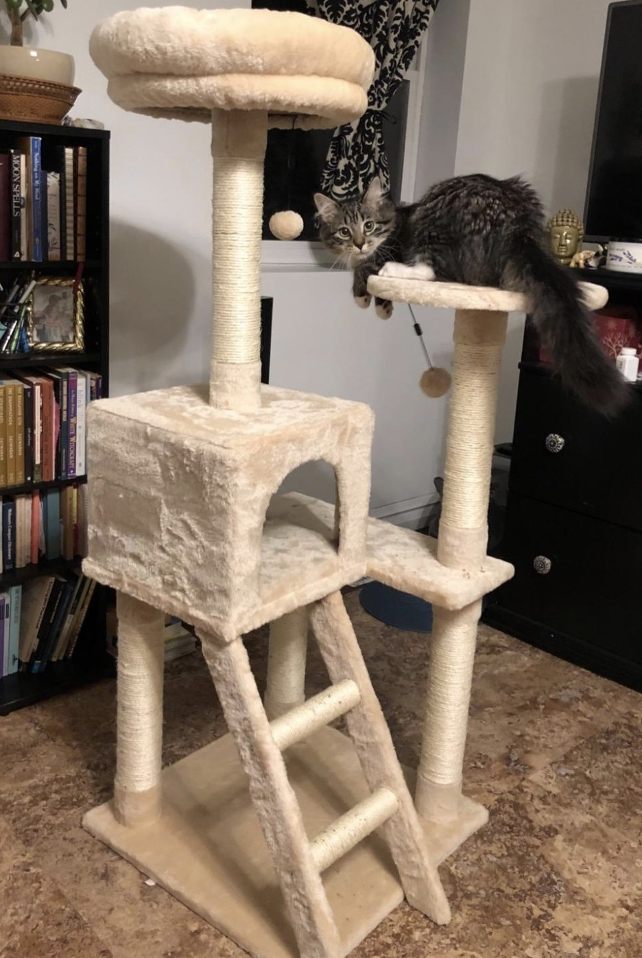 a kitten sitting on a tall ivory cat tree