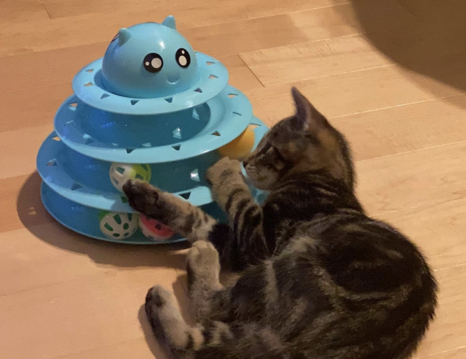 a striped cat playing with a blue tiered roller ball toy
