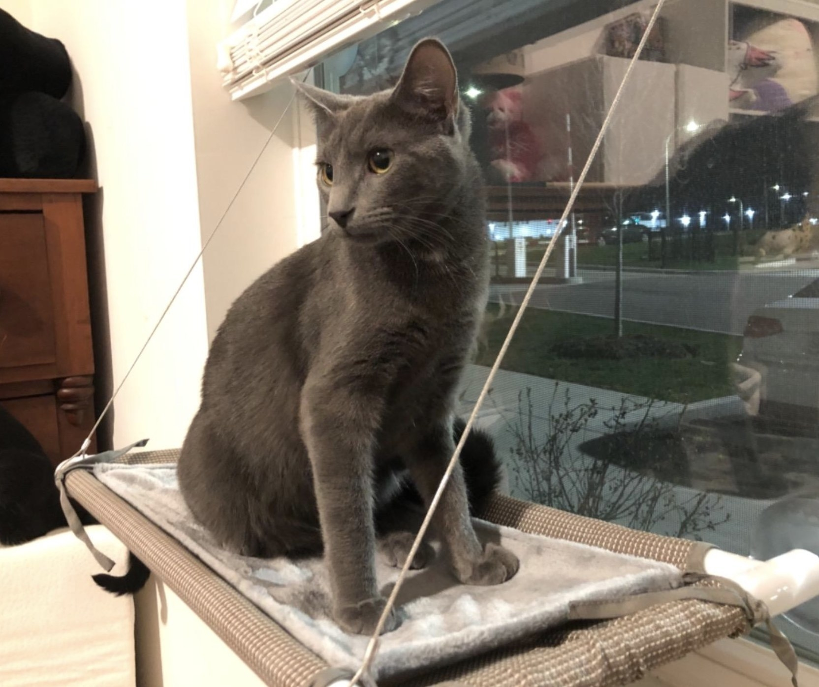 a grey cat sitting on a beige cat cot that is adhered to the window