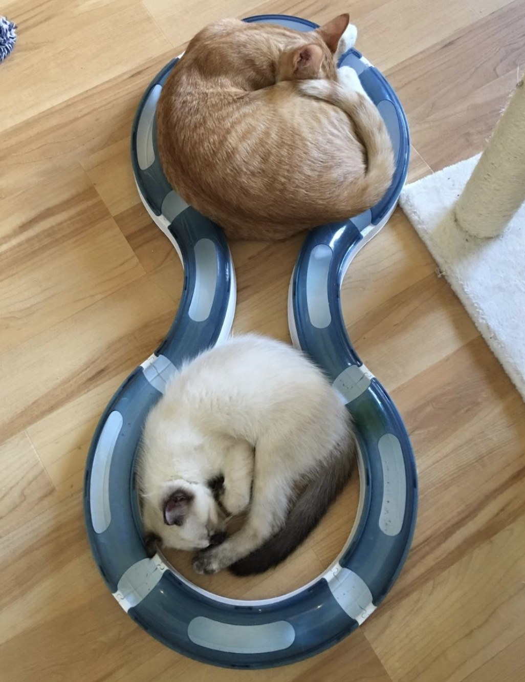 two cats lounging in a grey and white circuit toy that is in a figure eight shape