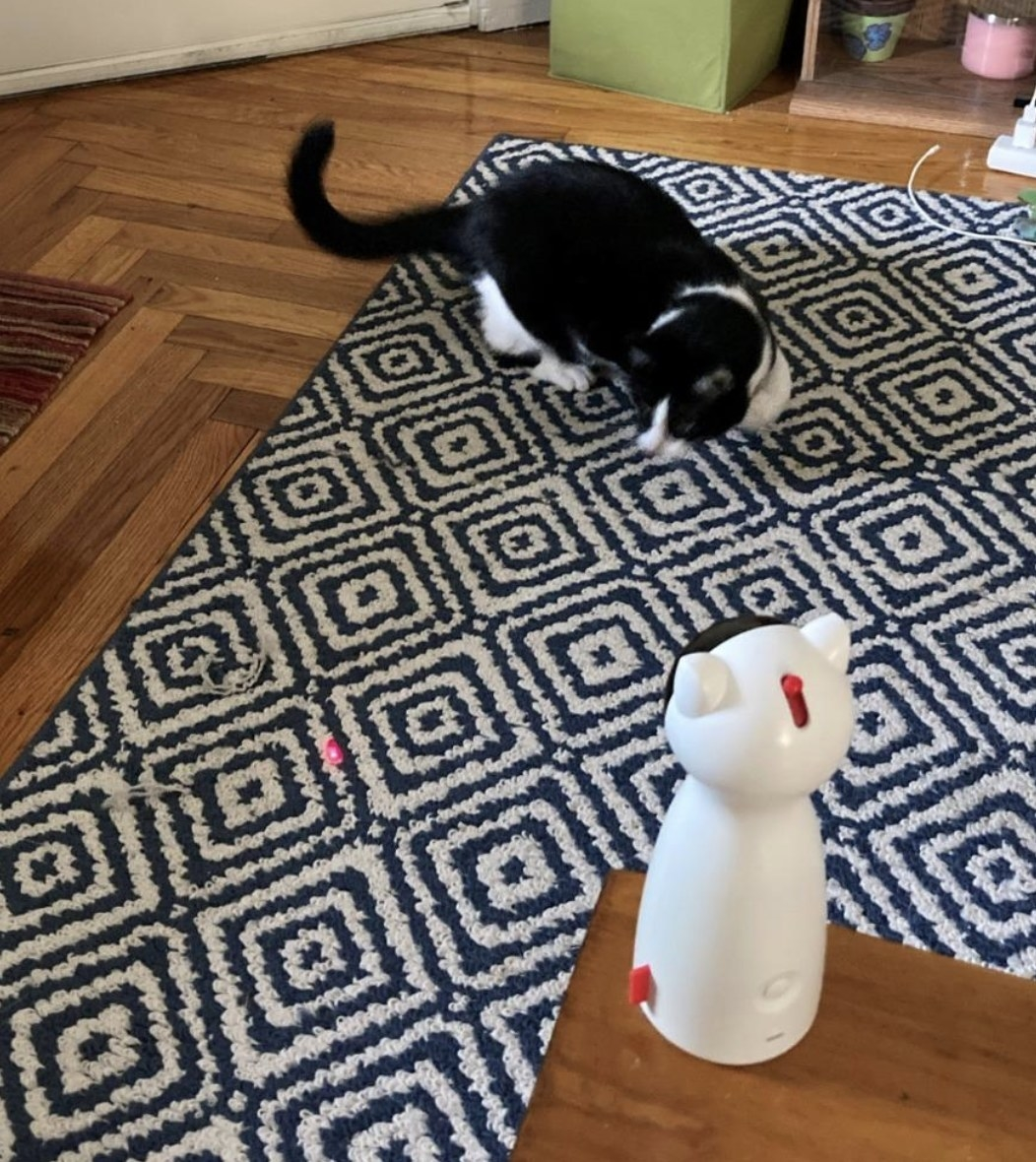 a black and white cat chasing a red laser from a cat-shaped automatic laser pointer