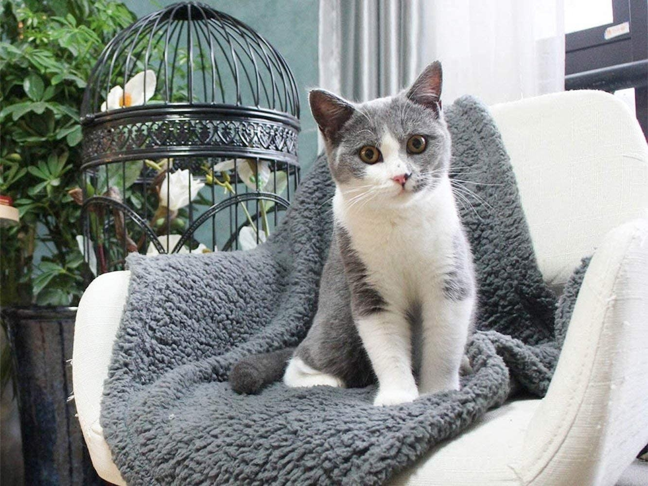 A grey and white cat sitting on a fleece pet blanket