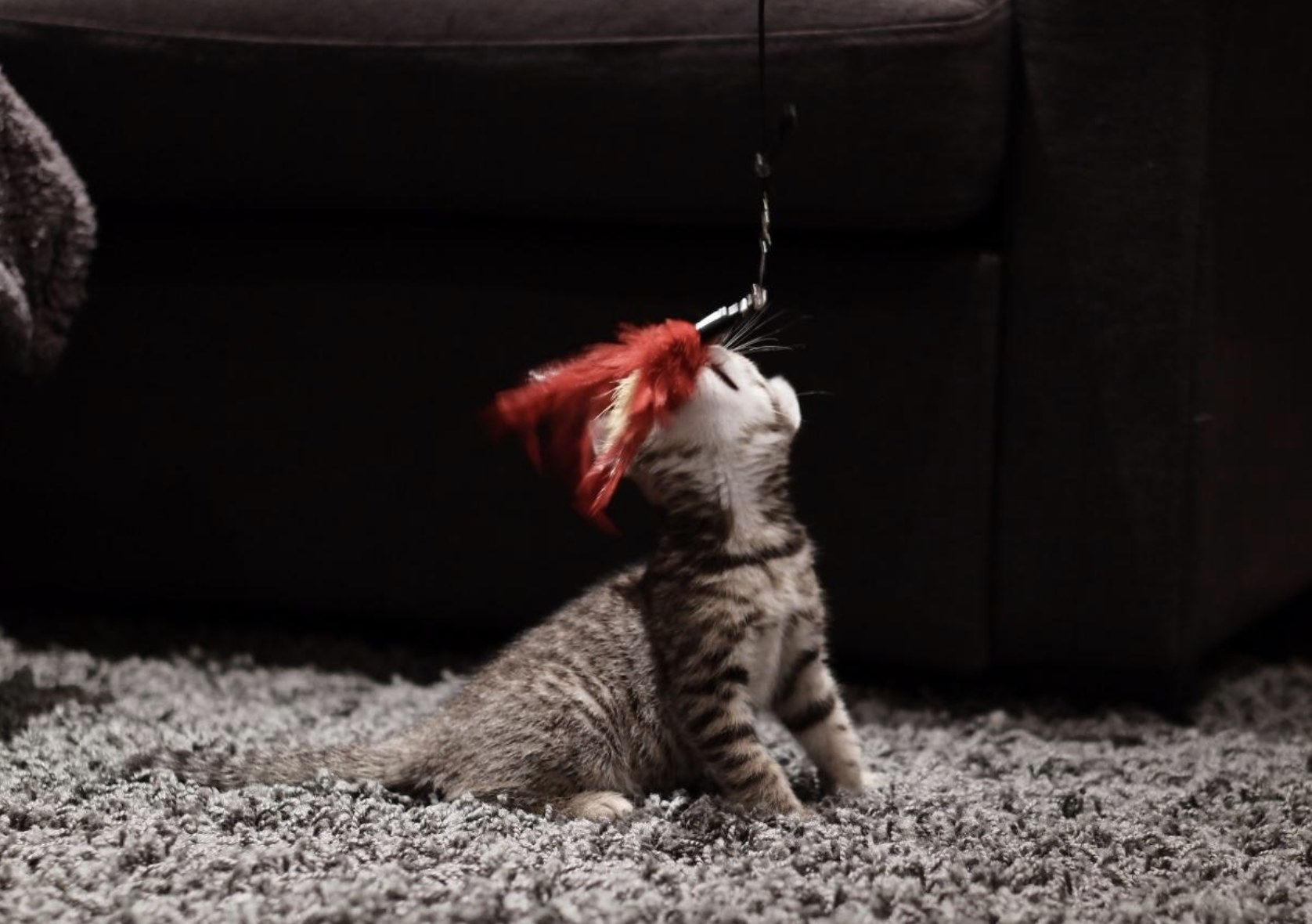 a kitten playing with a red feather attached to a wand