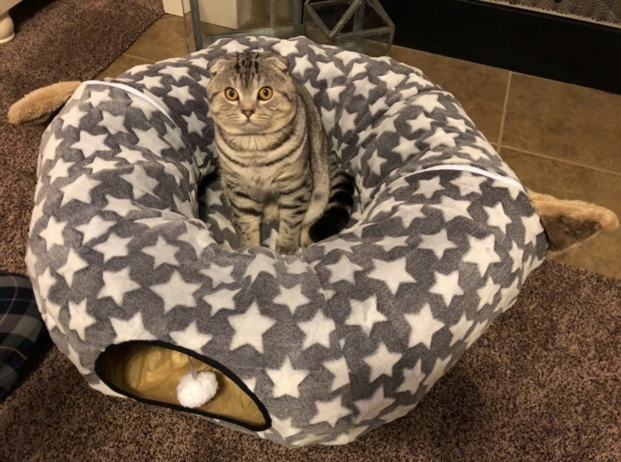 a cat sitting in the middle of a grey cat bed with white stars on it. the bed has a tunnel built into the rim of the bed