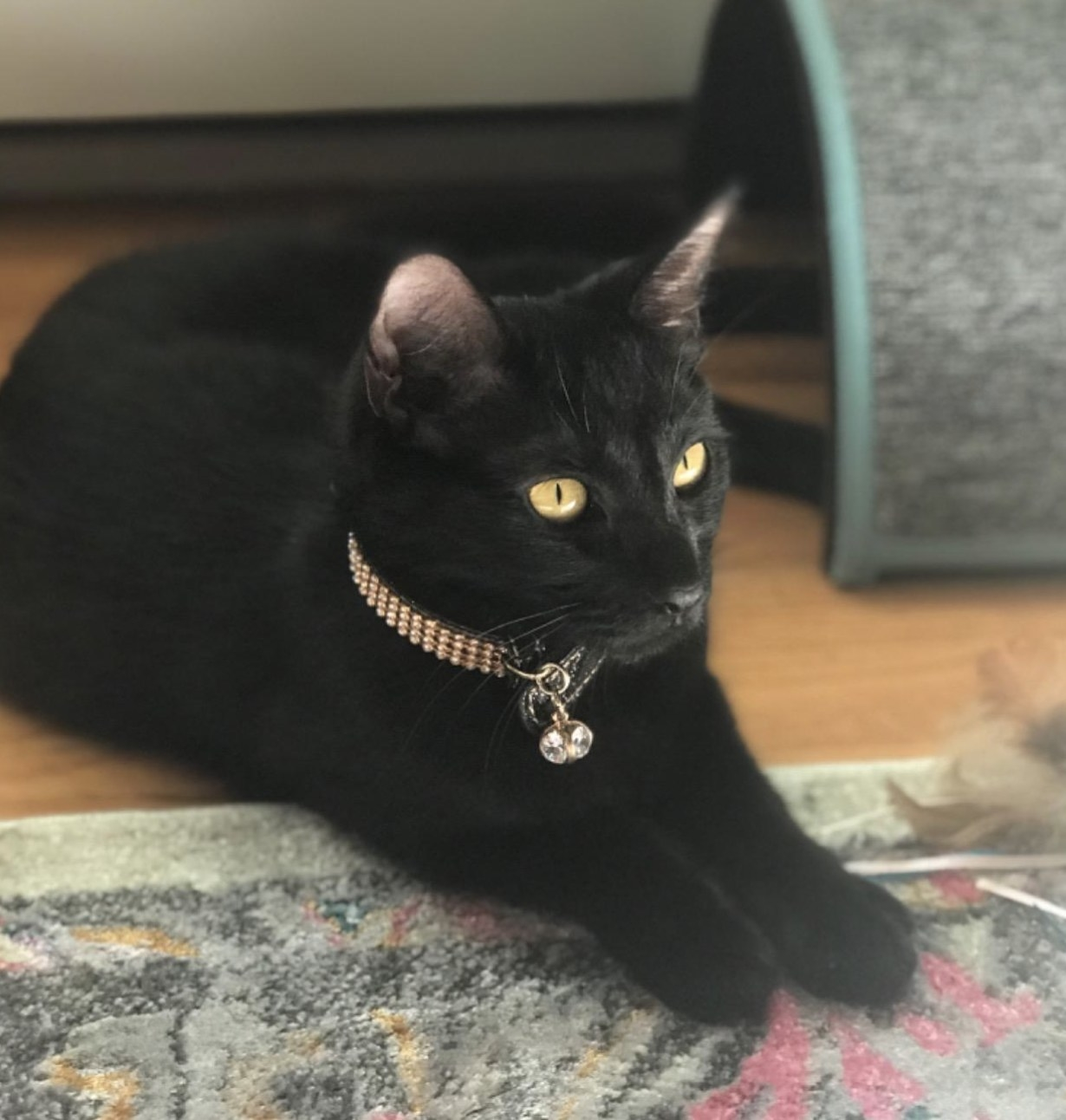 A black cat sitting on the floor while wearing a gold collar encrusted with gold rhinestones