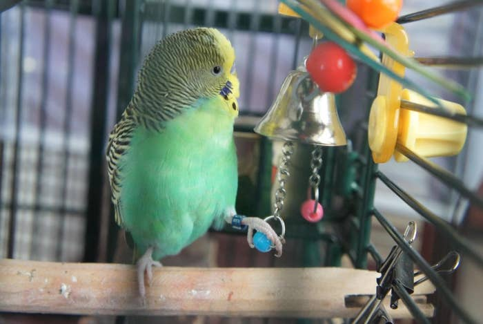 The small bell bird toy in gold with colorful balls