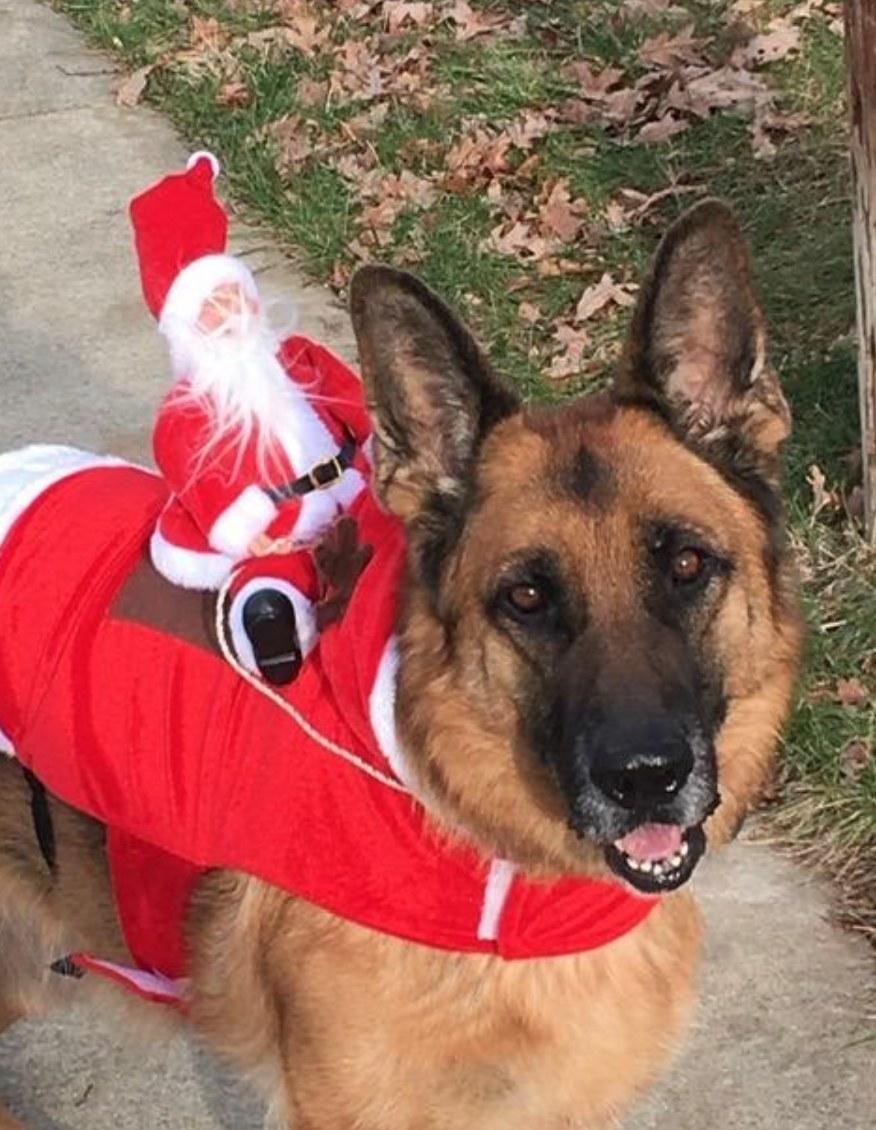 The Santa dog costume