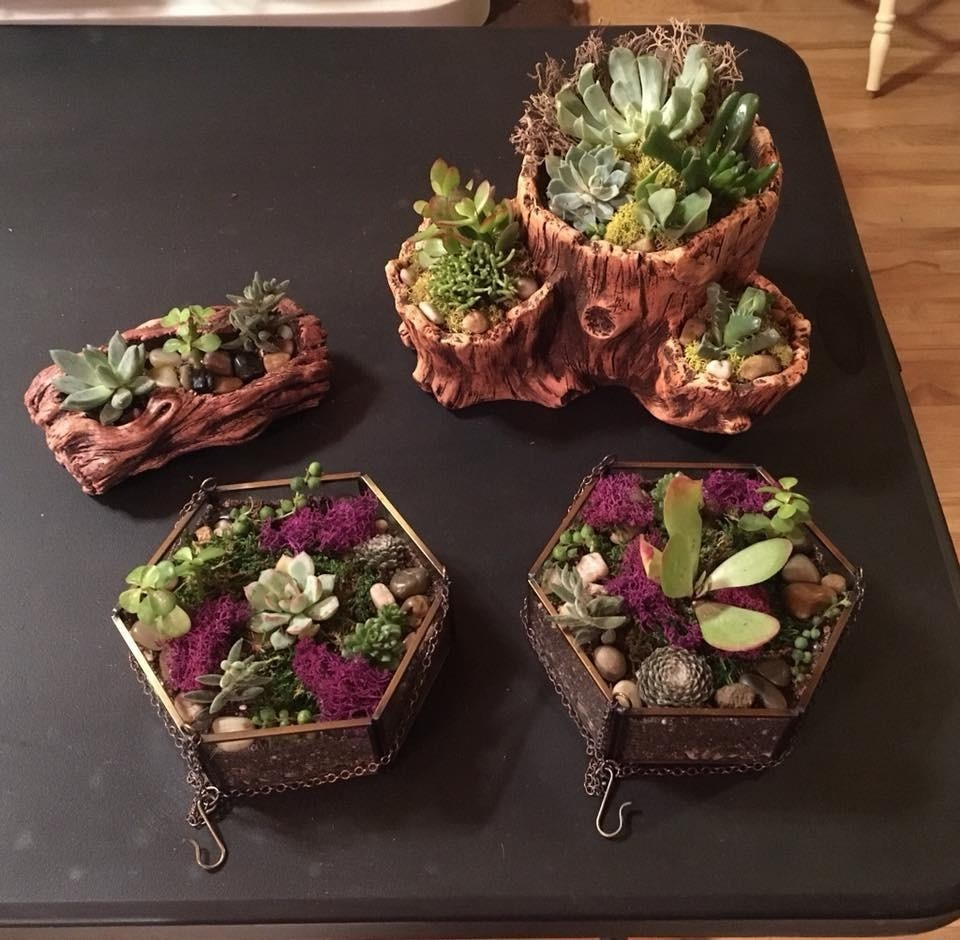 reviewer image of four diy succulent terrariums