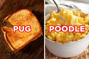 "On the left, a grilled cheese sandwich cut in half labeled ""pug,"" and on the right, a bowl of mac 'n' cheese labeled ""poodle"""