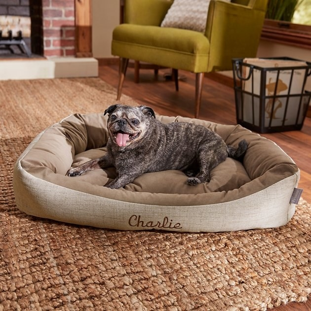"""Cute pug mix doggo sitting in a beige dog bed that says """"Charlie"""" on the front"""