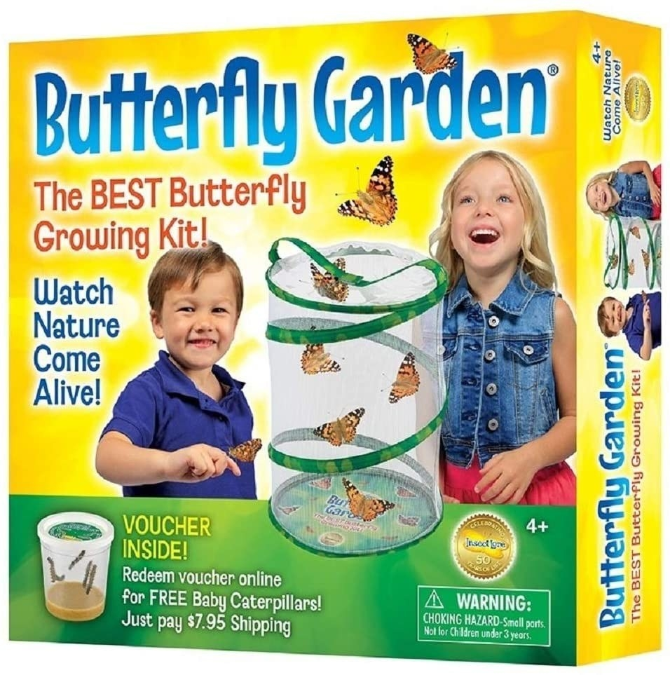 A butterfly growing kit that shows kids how caterpillars turn into butterflies