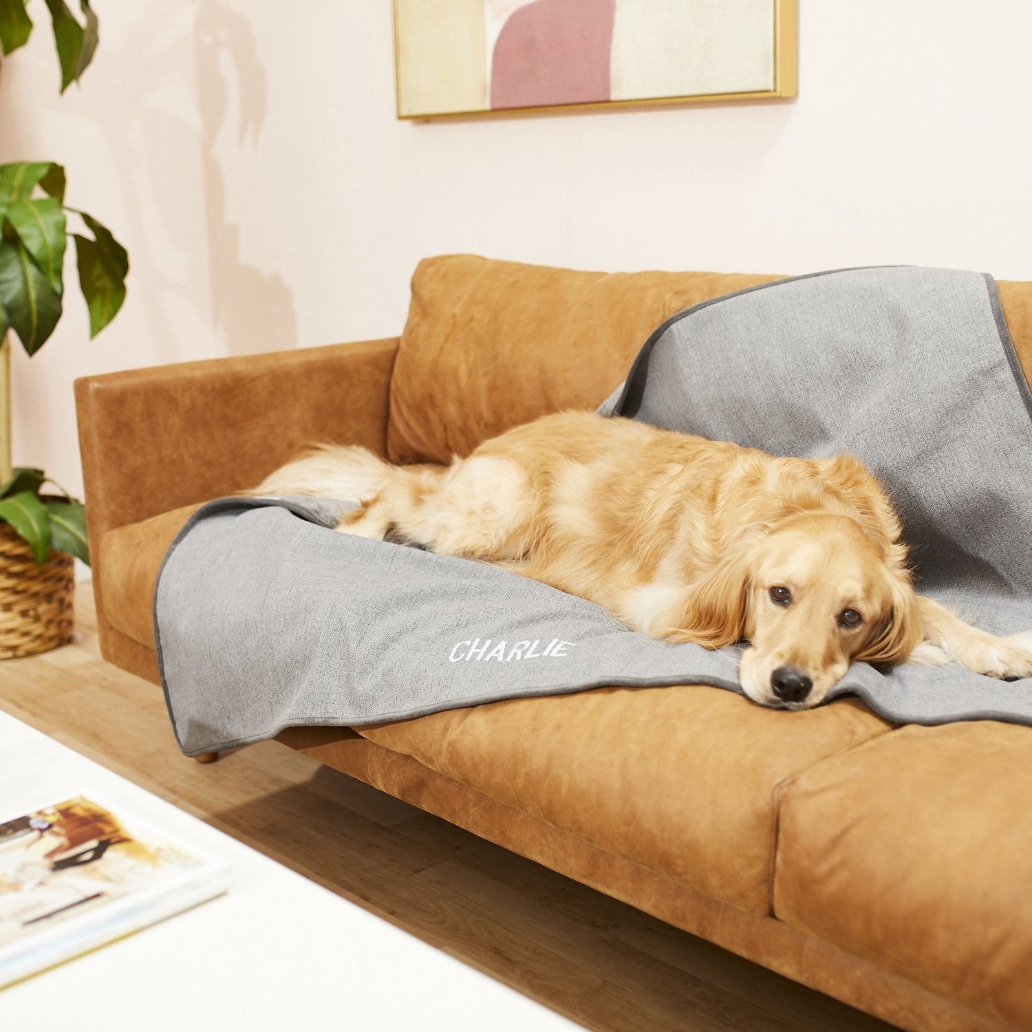 """Golden Retriever lounging on gray blanket that says """"Charlie"""" on the front"""