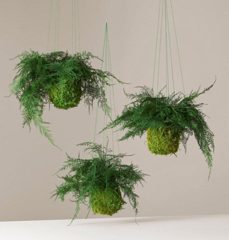 Thee hanging leafy green kokedama fern plants