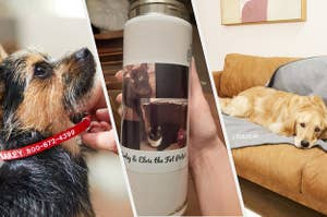 On the left, red and white personalized collar on dog. In the middle, reviewer holds beige thermos with cat pictures. On the right, a Golden Retriever sits on a gray blanket that says
