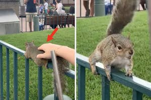 Someone pets a wild squirrel which then turns around, angry and ready to attack