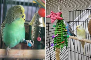 on the left a reviewer photo of bird playing with bell and on right birds near toy christmas tree