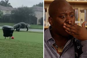 a picture of a giant alligator and a reaction photo of Titus from Unbreakable Kimmy Schmidt looking shocked