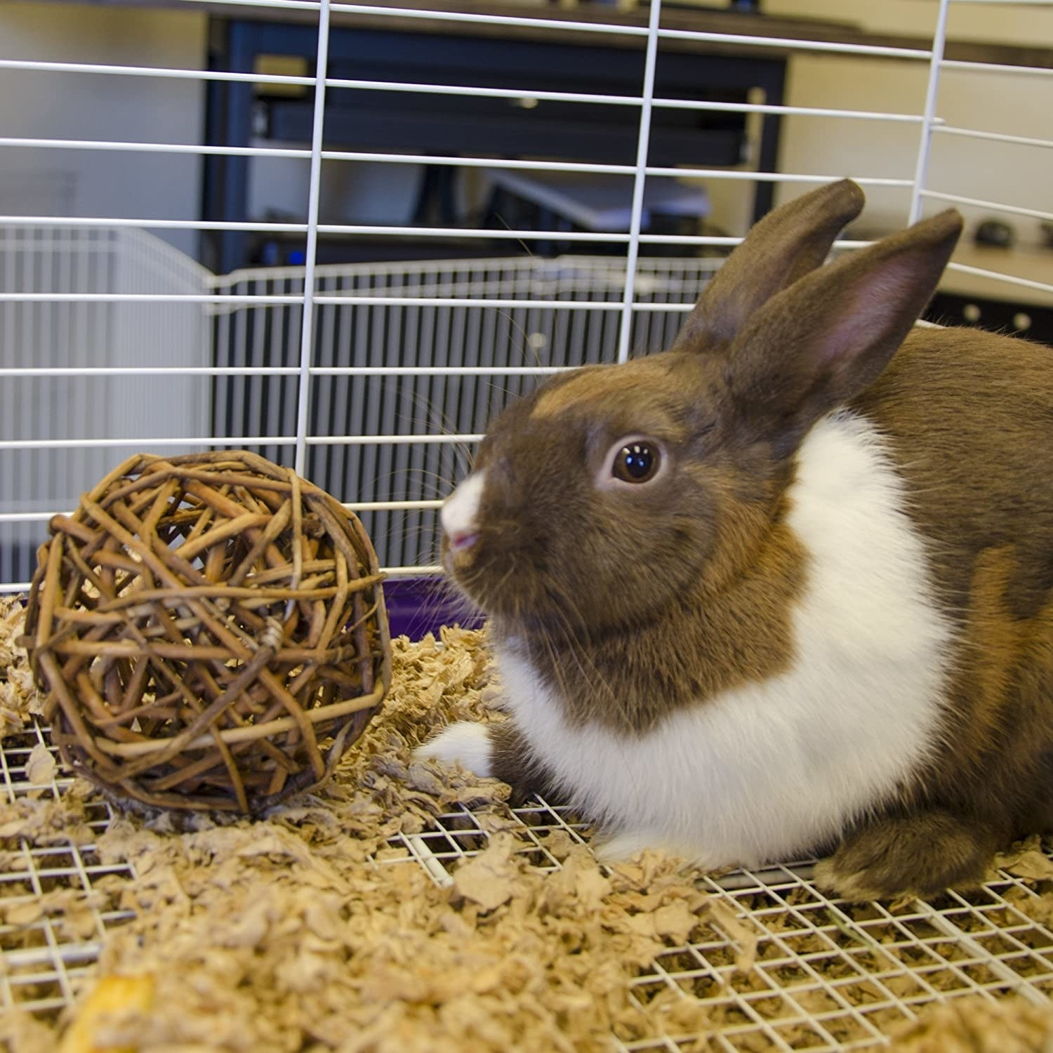 big brown and white bunny in her cage next to a willow branch toy