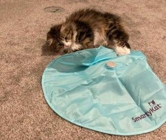 kitten peeking under a blue mat to find the wand