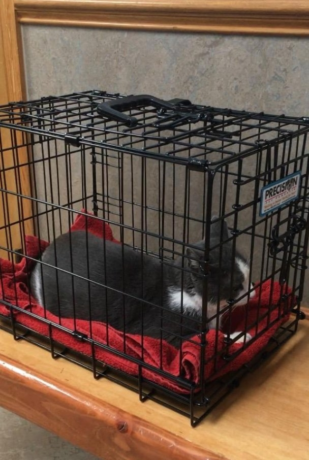 Reviewer photo of a cat in the crate