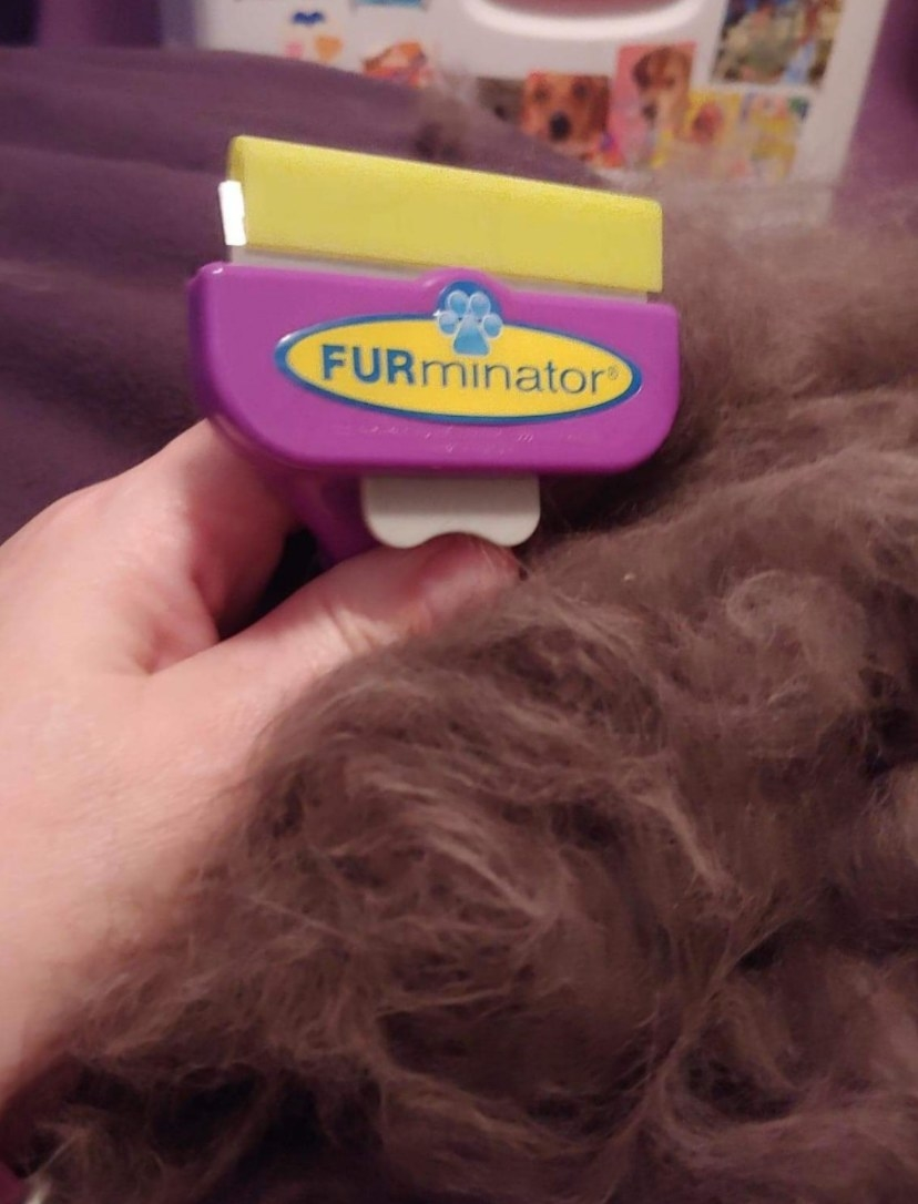 Reviewer photo of the cat brush collecting lots of fur