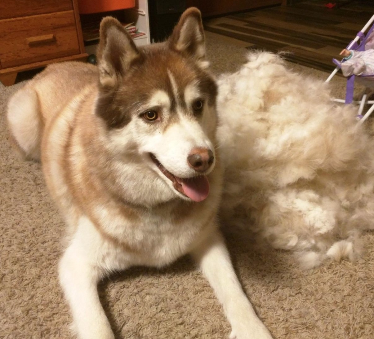 Reviewer's husky next to a huge pile of fur