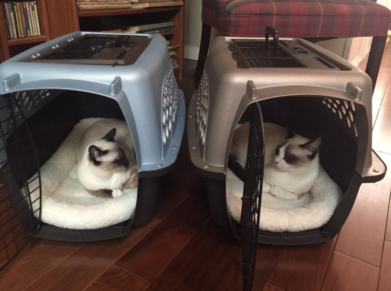 Reviewer photo of two cats in their crates