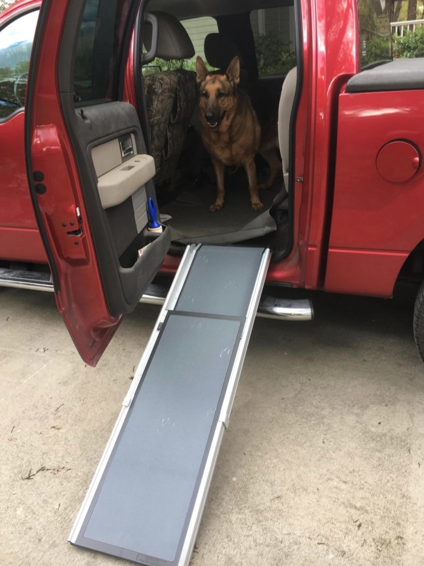 Reviewer photo of the pet ramp being used by German Shepherd to get out of car