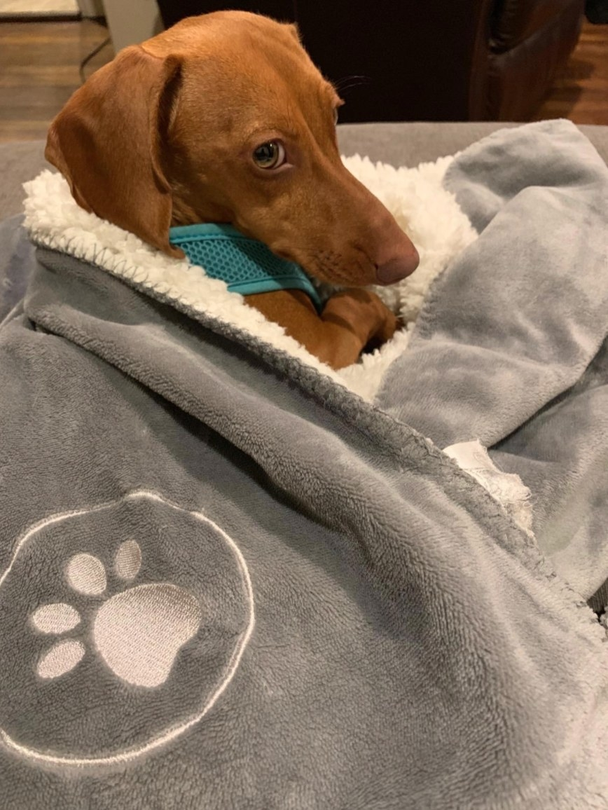 Reviewer photo of dog cuddled in blanket