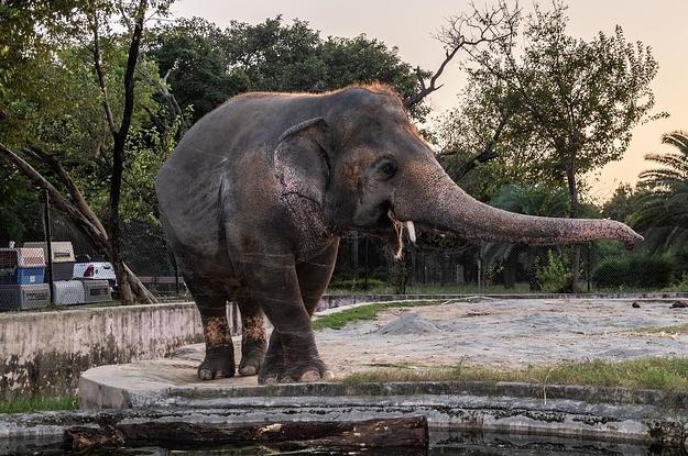 Der einsamste Elefant der Welt bekommt sein Happy End