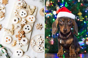 An assortment of Christmas cookies are on the left with a dog in a Santa hat