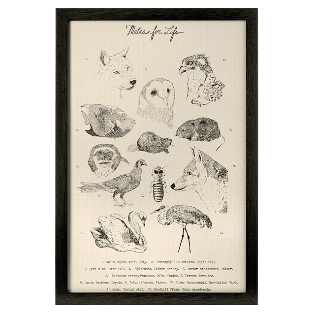 The print, which features sketches of animals that mate for life