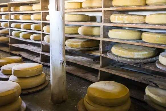 Rows of wooden shelves stacked with aging wheels of Parmiggiano Reggiano cheese