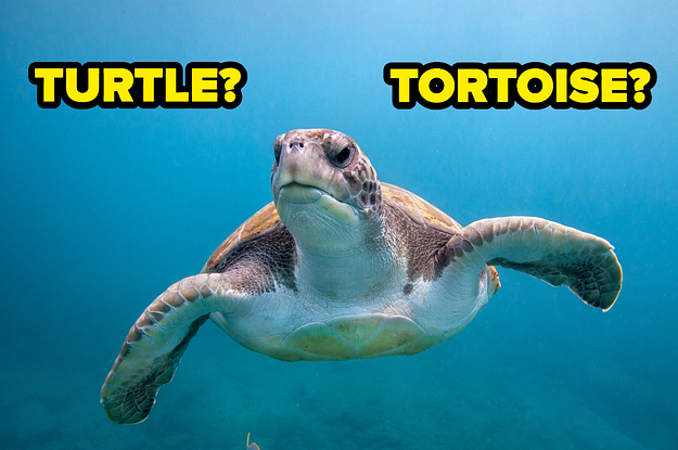 Here Are 16 Animals People Commonly Confuse For Each Other And I Bet You Can