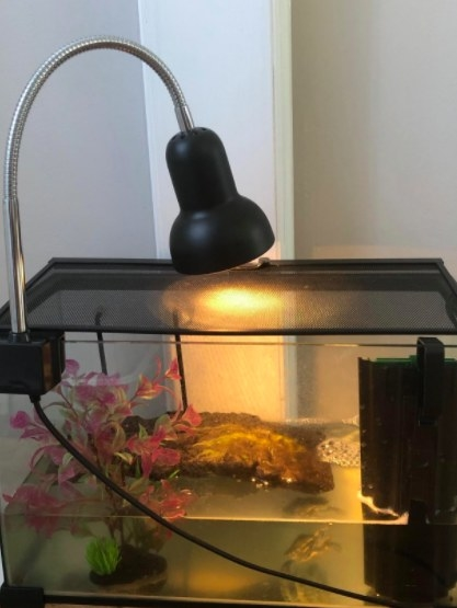 black reptile lamp pointing toward tank