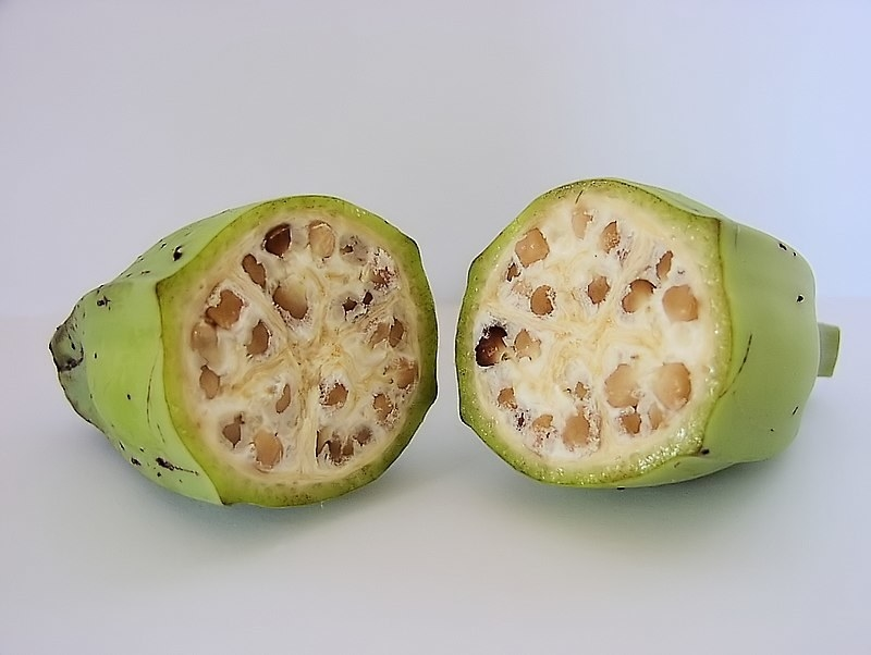 Cut wild-type banana, depicted with thick, hard green flesh and hard seeds