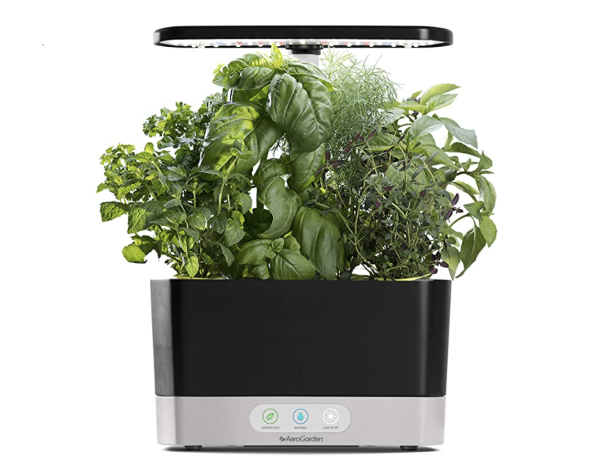 Black and white AeroGarden with leafy herbs growing on top