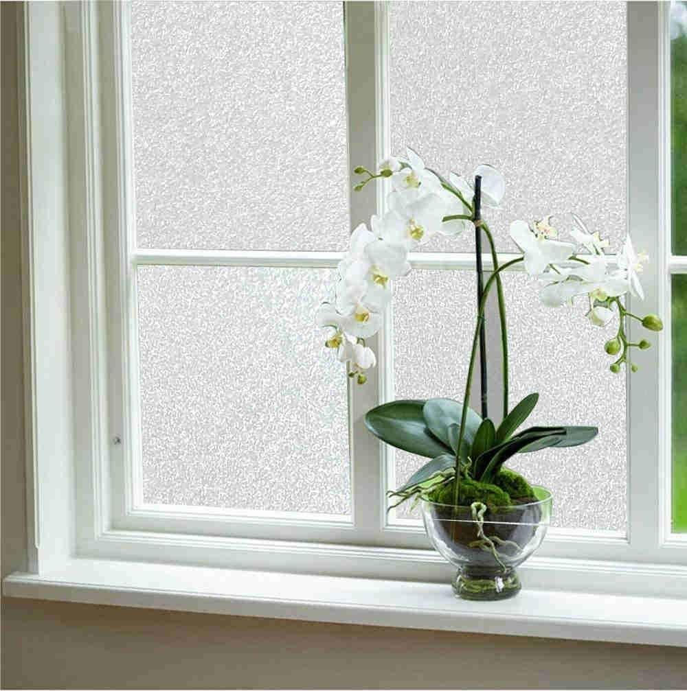 Privacy window film on a window next to a plant
