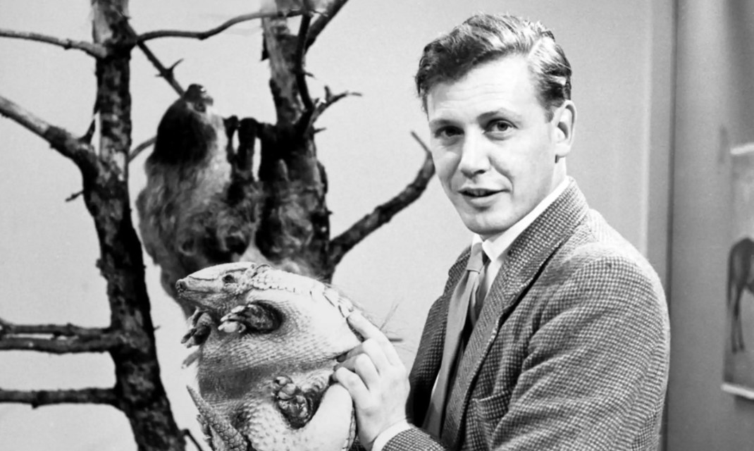 A young David Attenborough holding an armadillo as he addresses the camera.